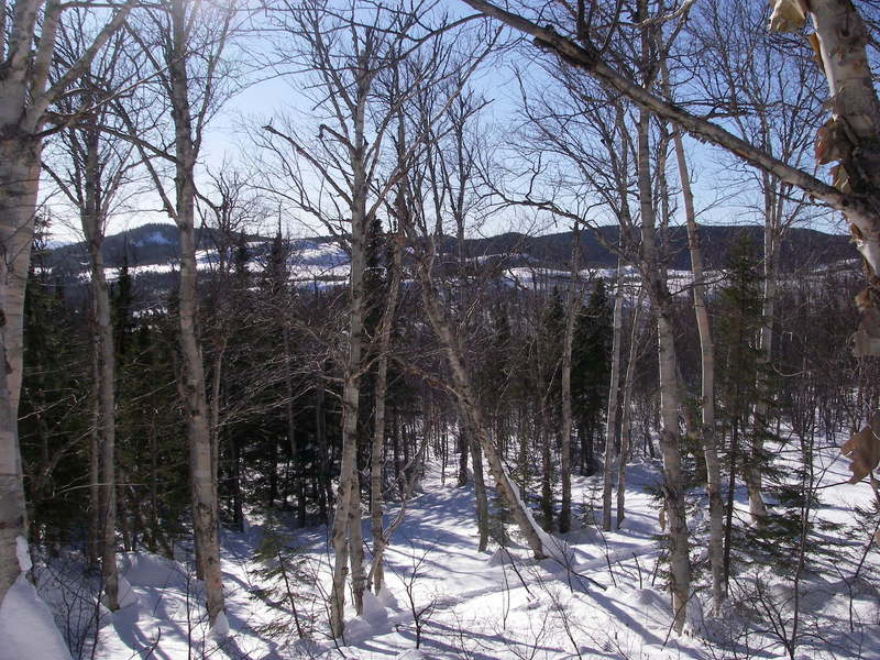 Snowshoe trail D7 as seen from D6.