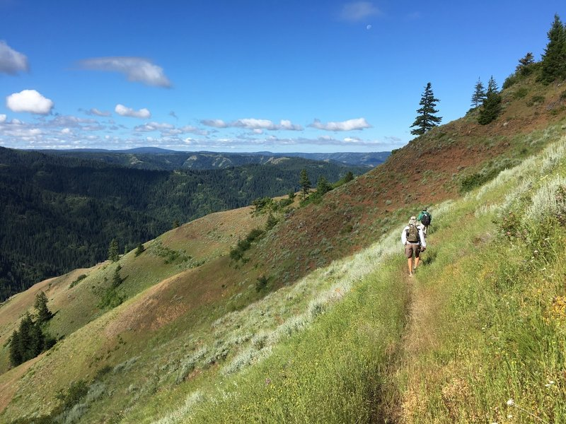 Upper trail of North Fork commonly called the Coyote Ridge section.