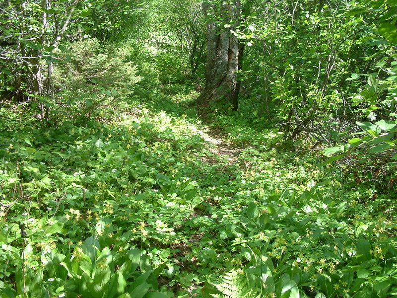 E2 trail in summer accessed by a good connecting trail branching off Chaulk's Run.