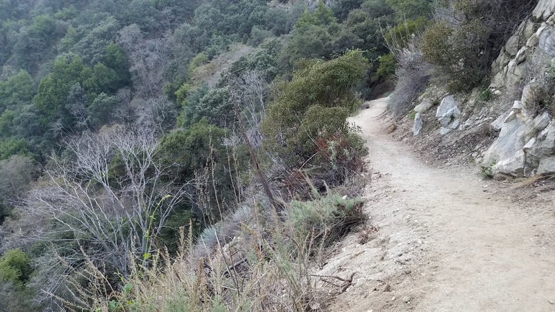 The beginning part of the singletrack.