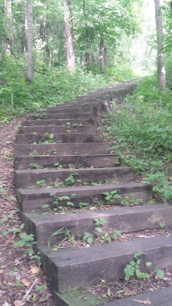 River Trail Staircase at Flandrau