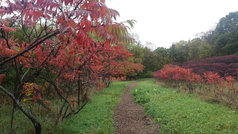 Green Grass and Red Sumac