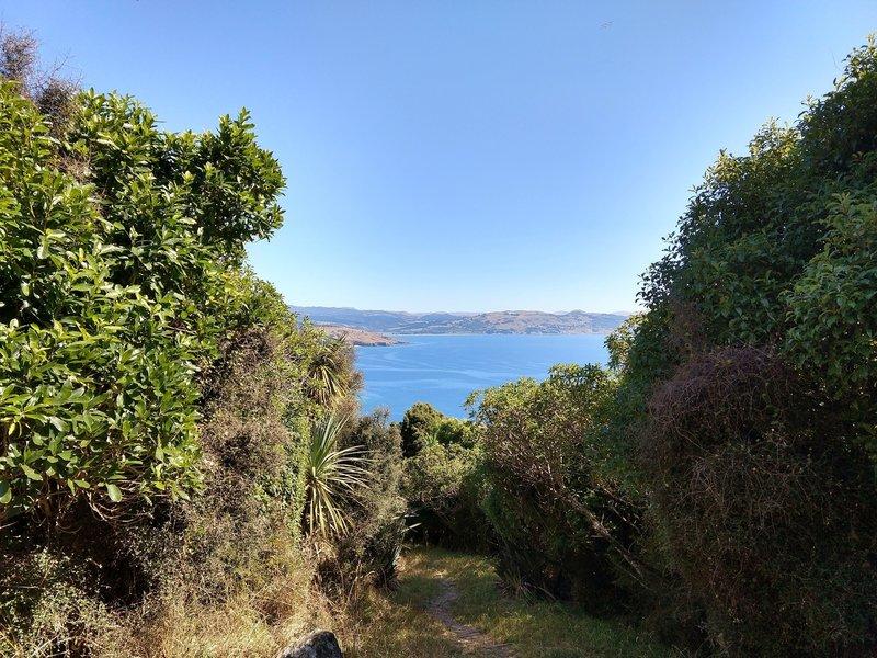 Walk down towards Heyward Point through coastal forest