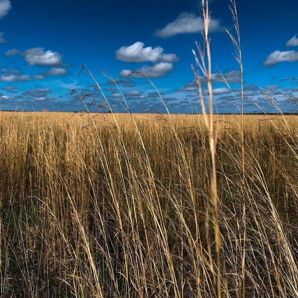 Grasslands on the Florida prairie