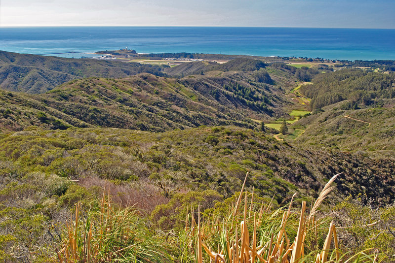 Spine Trail is on the ridge that goes from the left to the Eucalyptus trees in the center. Pillar Point and harbor in the distance and San Vicente Farms in the center