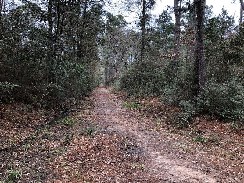 Looking west on Buckhorn from Jones Trail
