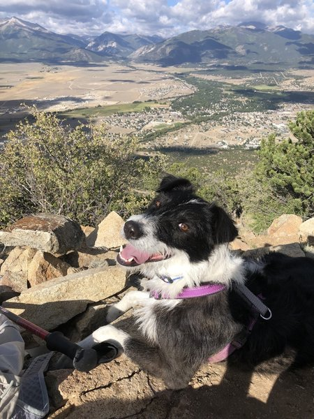 Effie on the summit in August. Mt. Princeton (14,197') on the left; Mt. Yale (14,196') obscured by clouds in center; Mt. Columbia (14,073') on the right.
