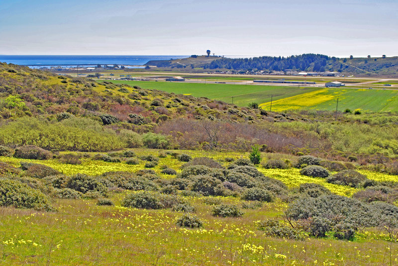 Pillar Point and harbor, San Mateo Airport and lots of bermuda buttercups from Farmers Daughter Trail