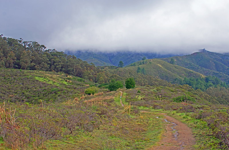 """Farmers Daughter Trail with the ridge of the """"Spine"""" running from the center to the right up towards the Scarper Trail"""