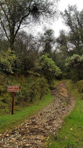 Cardiac Bypass Trail on a rainy day.