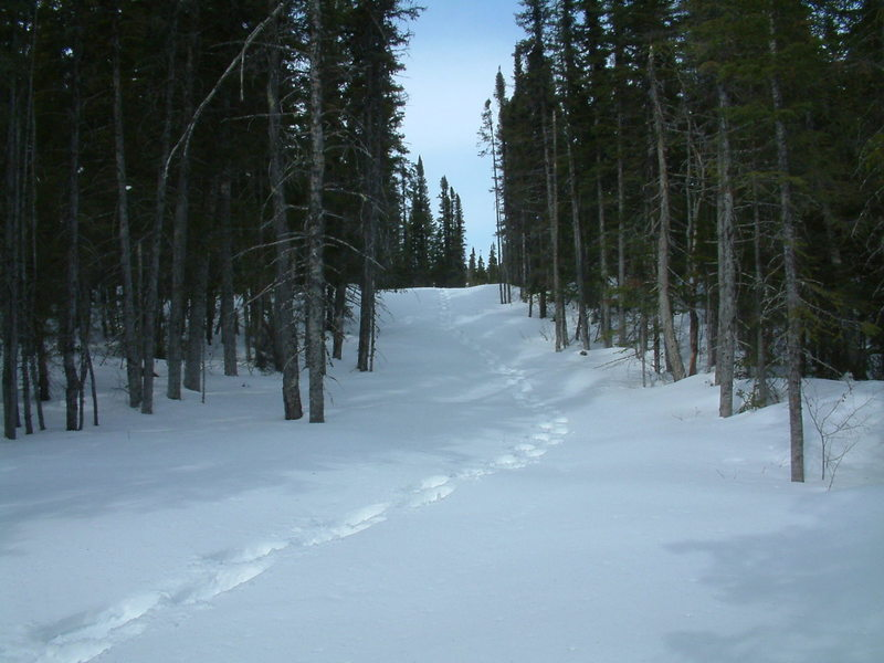 Backcountry ski and snowshoeing opportunities beyond Colin's Hut on Tilt Pond Trail