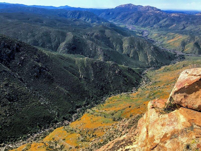 California Poppies turn the valley orange