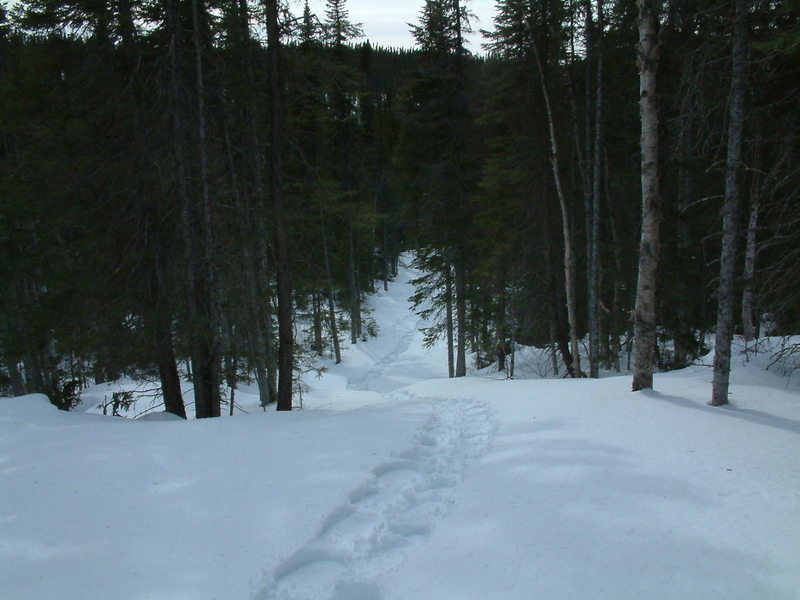 The trail to Tilt Pond beyond Colin's hut is a standard width back country ski trail.