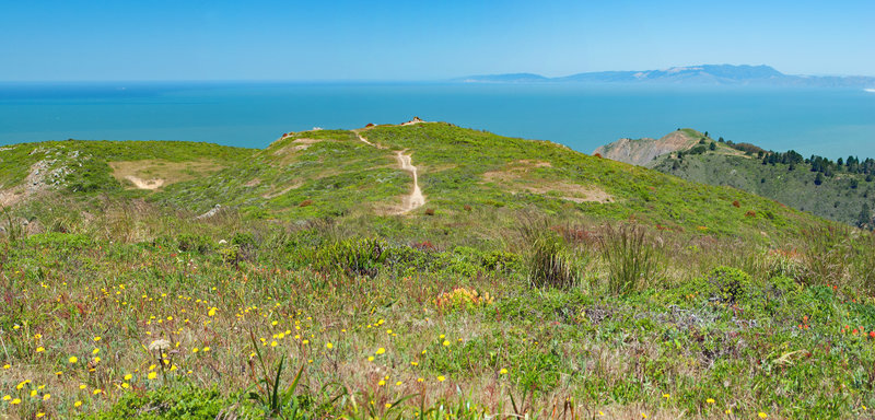 Sun, Flowers and sweeping views from along the ridge of San Pedro Mountain.