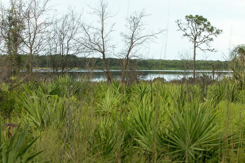 A view of Lake Manatee.