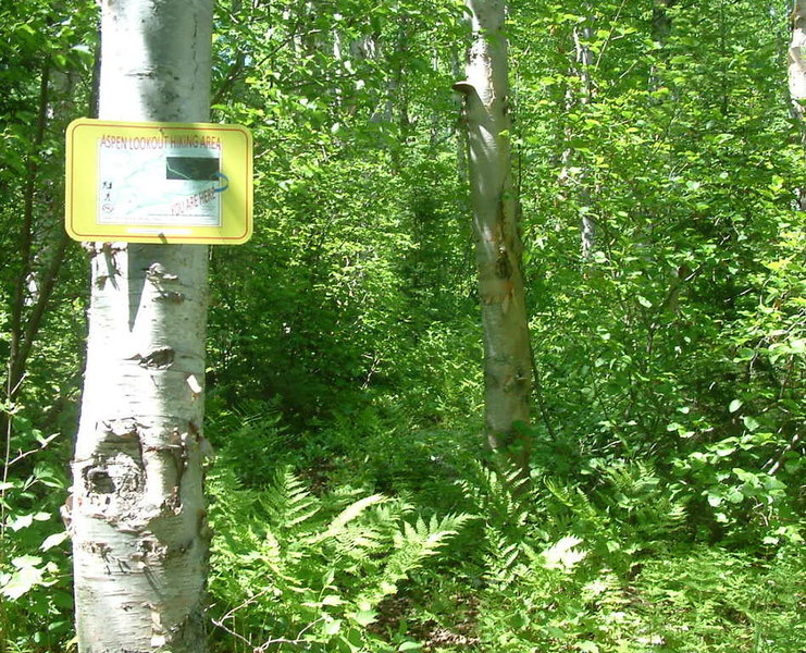 Chaulk's Run in summer with hiking trail to E2. Snowshoers can also use this path to avoid the steeper climb from E1