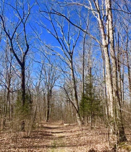 Bear Creek Loop Trail