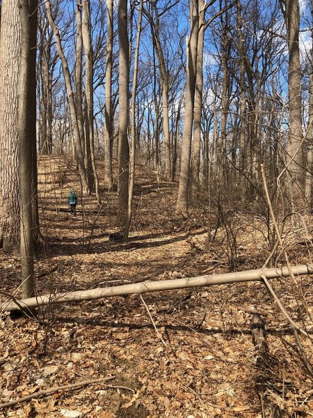 Portion of the trail with typical debris across
