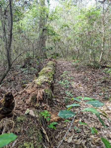 Trail near split from LSHT