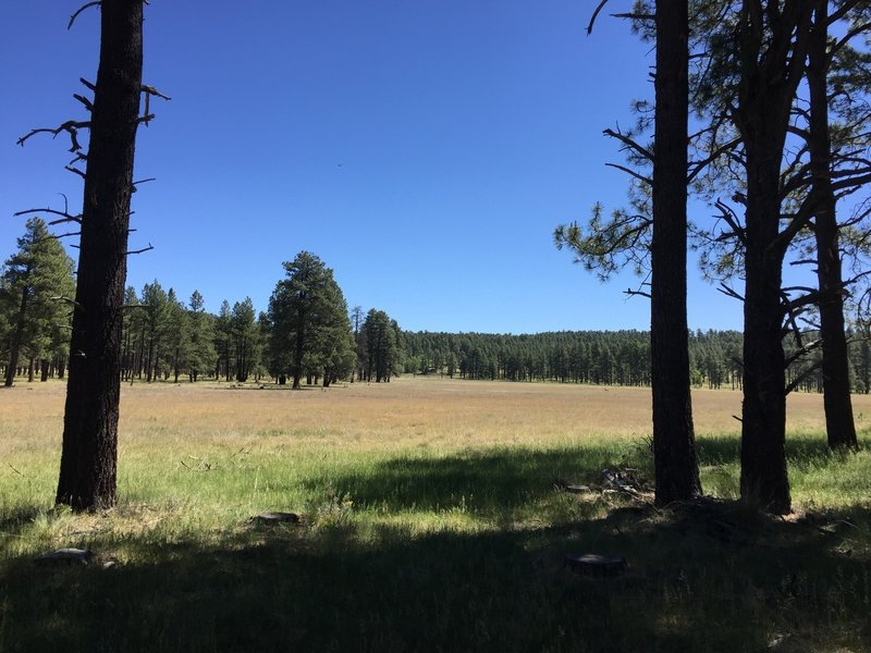 Nice meadow from trail along the edge of the forest. There was an antelope grazing there, just a tiny spot in this wide view.