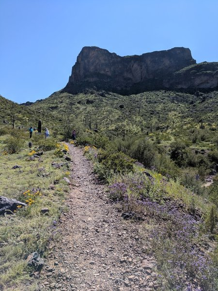Starting up the Calloway Trail, with Picacho Peak looming in the background.