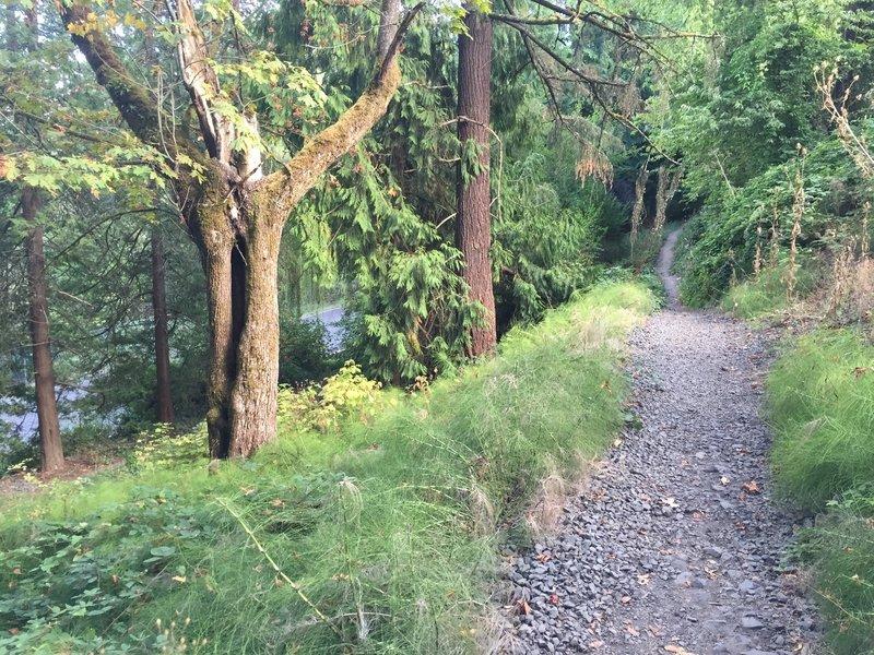 MAC Trail