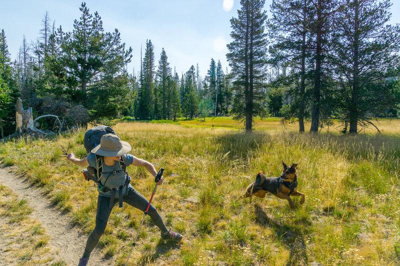 Field Fetch #1