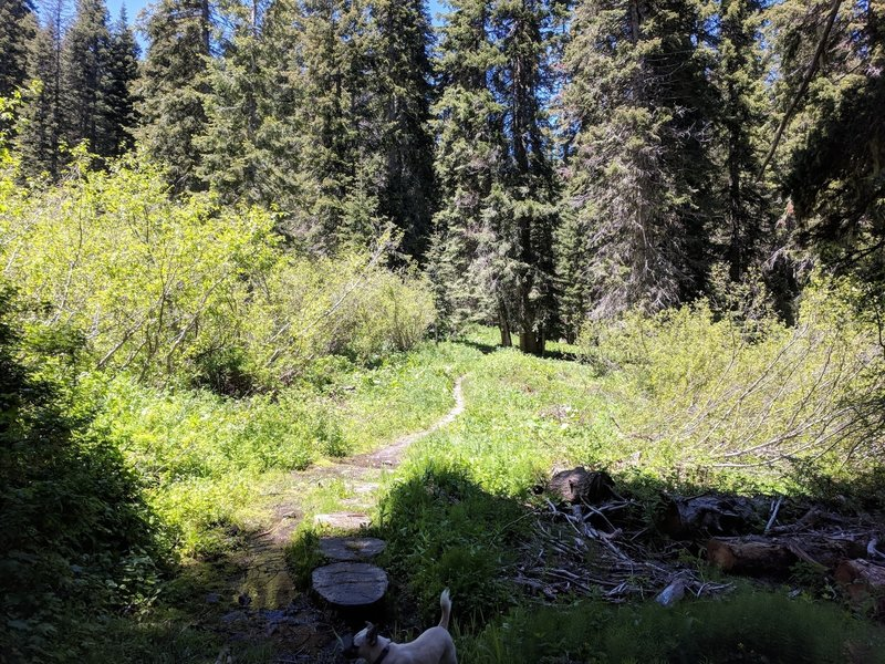 Lower part of Sturgis Fork trail.