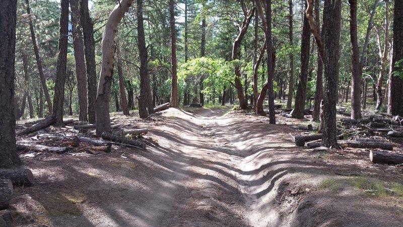 Rutted trail.