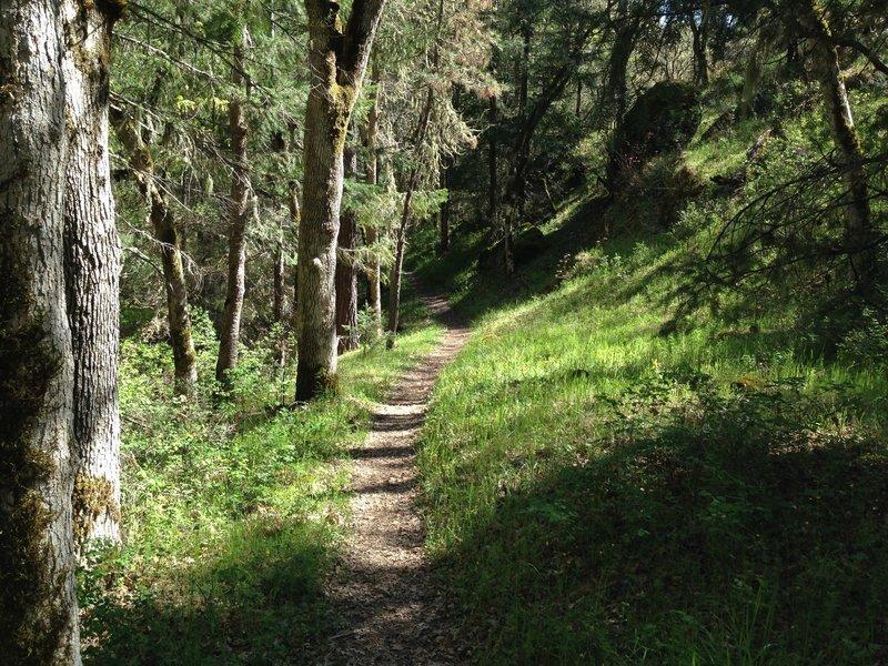 Halfway up the Bear Gulch trail