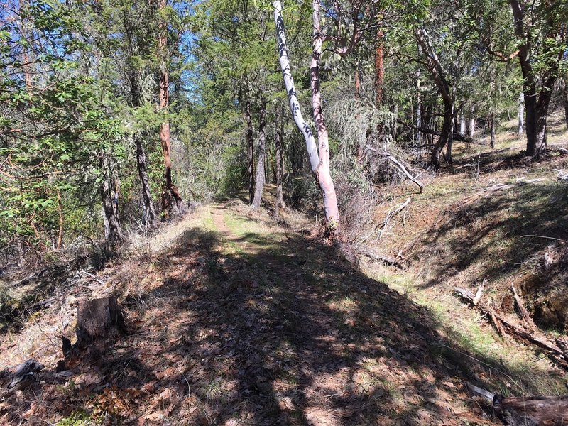 Head along the ditch trail where the water used to flow to support historic hydraulic mining.