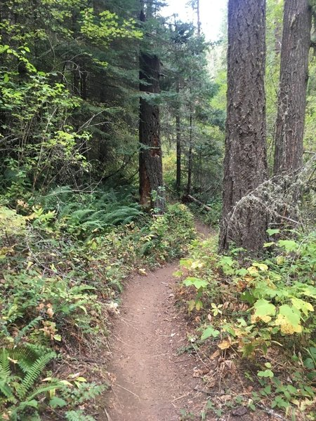 Heading up Bear Creek Trail.