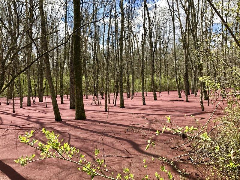 Pink Swamp Water