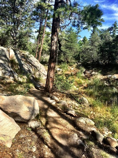 Rocky section of Trail #324