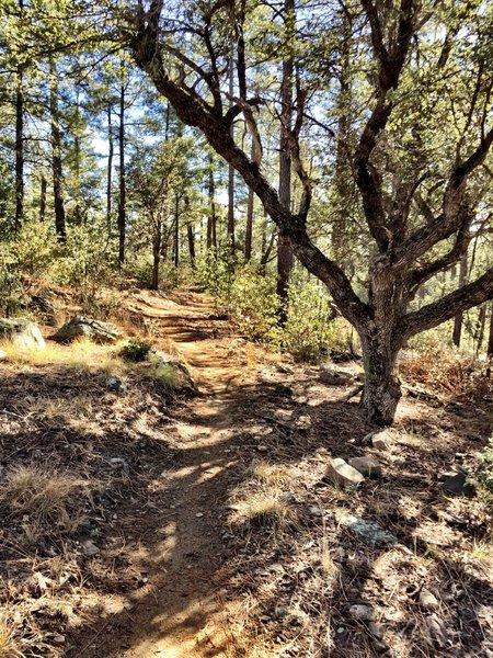 Trail 322
