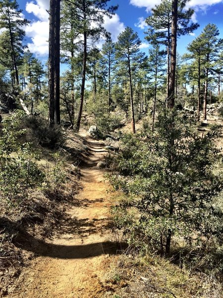 Wooded section of Trail 318