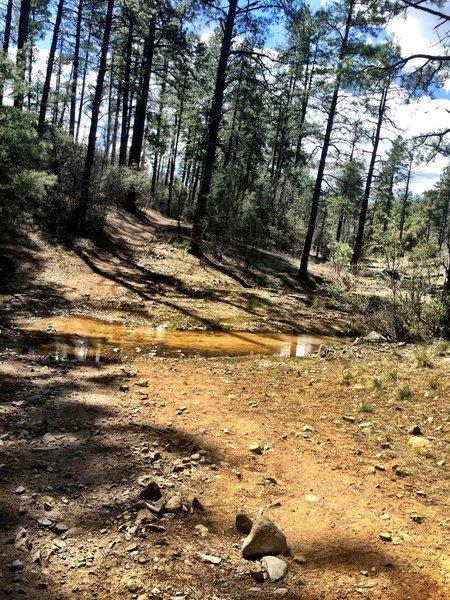 Creek crossing on Trail 392
