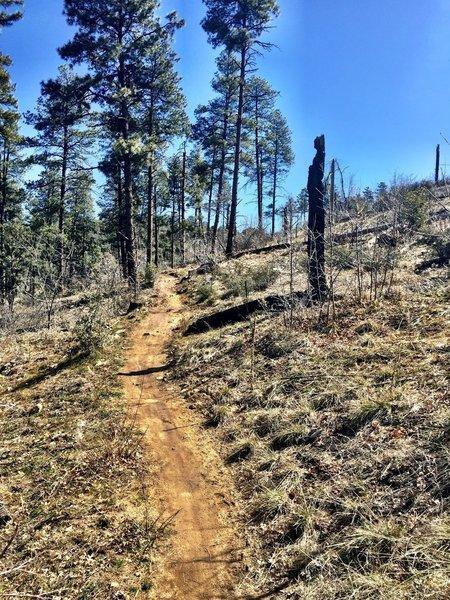 Trail 392 through the pines
