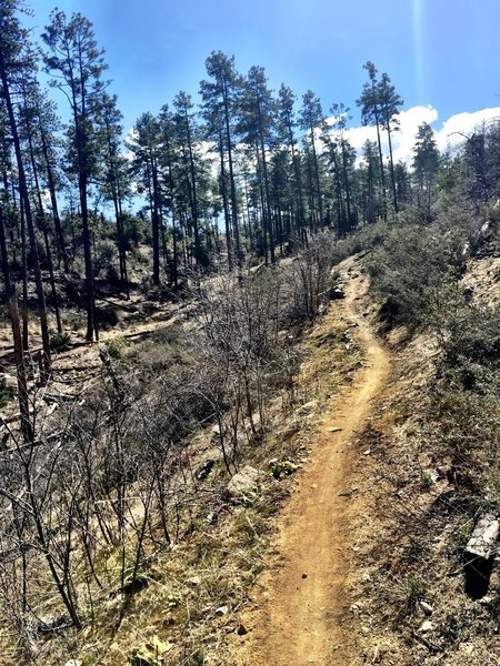 Trail 392 straightaway