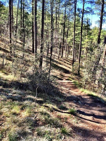 Trail #367