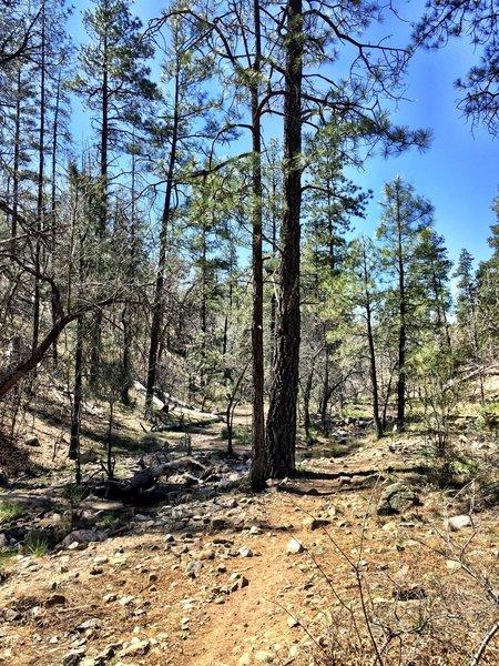 Trail #367 - Miller Creek Trail