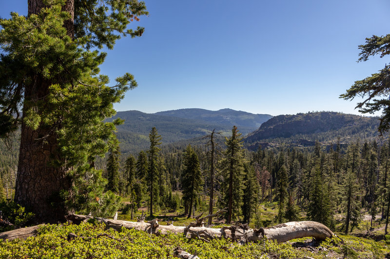 View into the heart of Tahoe National Forest