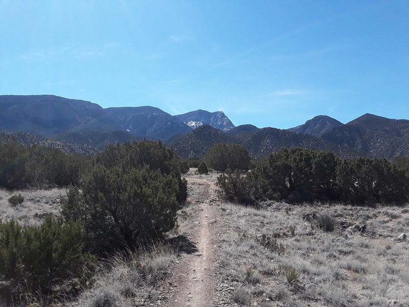 Lovely March day in the Placitas, Well marked trails!