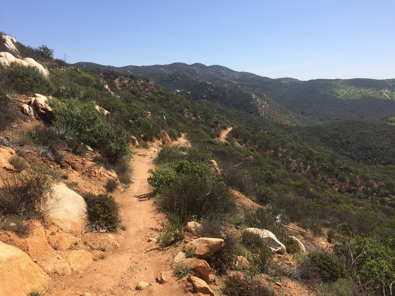 View from top of Martha's Grove Trail.