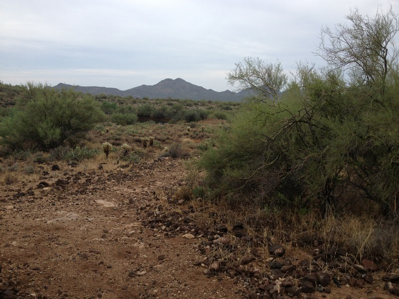 Just outside Spur Cross gate looking South at Cave Creek Park in the distance.