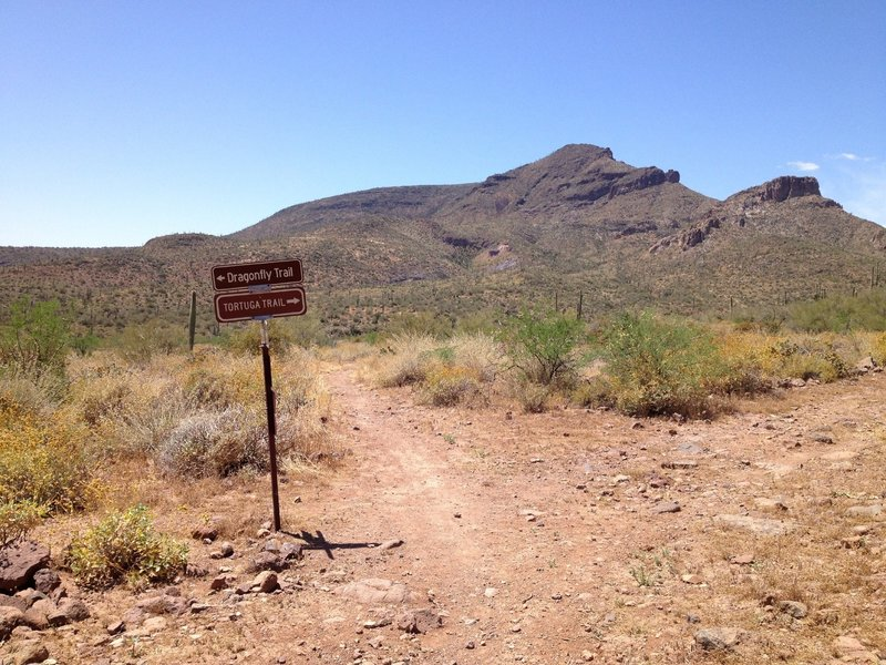 Junction of Spur Cross Trail and Dragonfly Trail and Tortuga Trail with Elephant Mountain in background. Stay straight