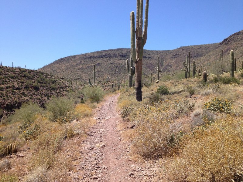 Beginning of steep section on Spur Cross Trail. The summit is not far so gut it out for the great views.