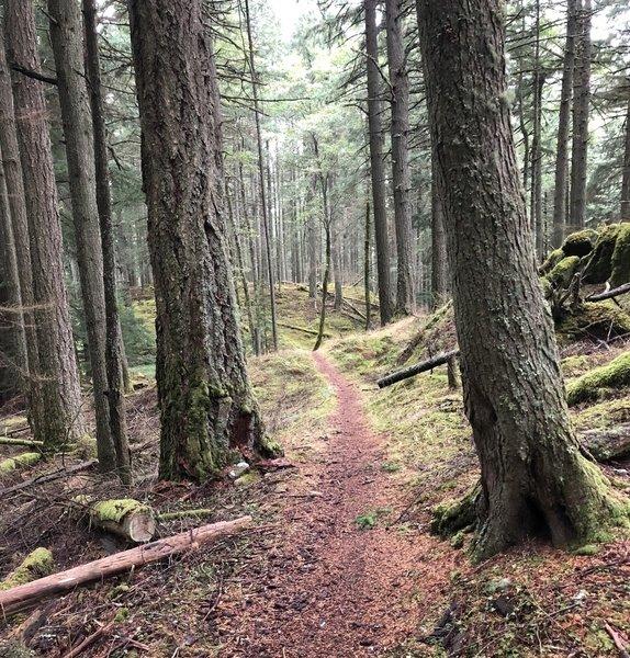 Start of the singletrack on the Mt. Pickett Summit Trail.