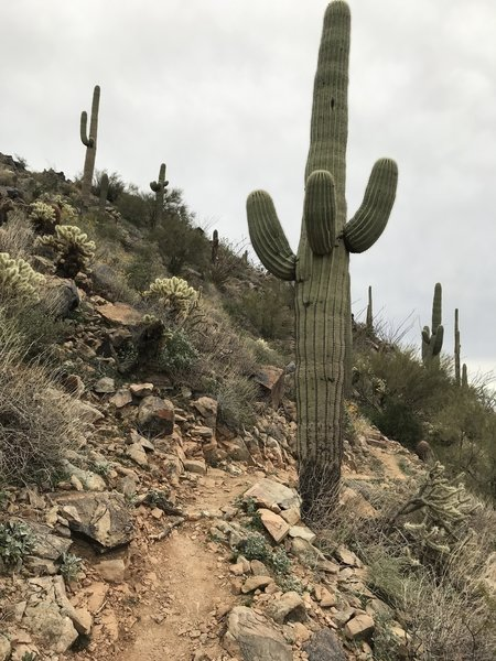 Extremely difficult Western Loop Trail.  A narrow switchback loaded monster.
