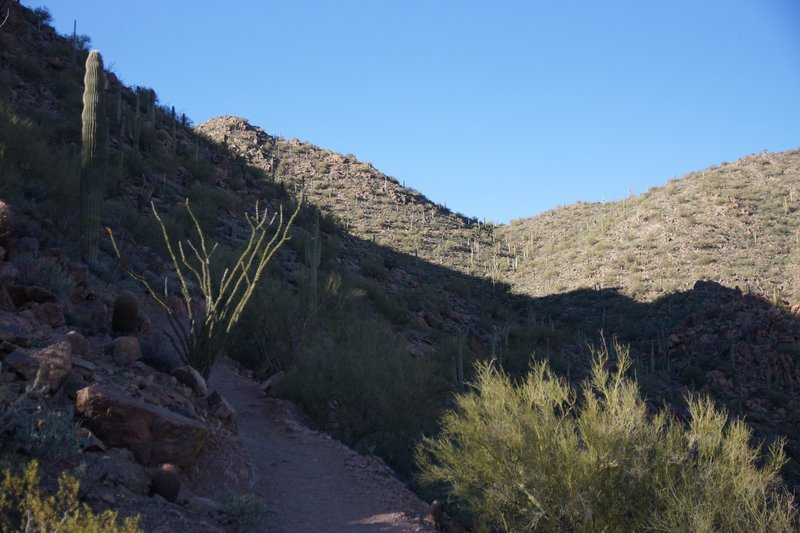 Mountain and Trail